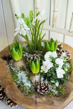Frühlingsgrüße im Winter - Spring decoration - Dekoration Deco Floral, Arte Floral, Art Floral Noel, Spring Decoration, Deco Nature, Nature Table, After Christmas, Winter Springs, Ikebana