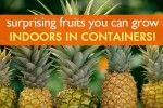 6 Surprising Fruits You Can Grow Organically Indoors in Containers! -by Beth Buczynski, 09/10/13