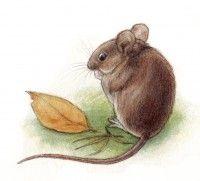 Metsä kuvat - Kiertävä luontokoulu Naakka Animals, Animales, Animaux, Animal Memes, Animal, Animais, Dieren