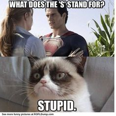 "What does ""S"" stand for? #fail #funny #meme #lol #cat"