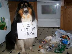 Dog Shaming: 40 Hilarious Pictures Of Dogs In Huge Trouble