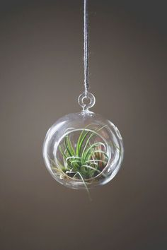 This would be so fun to use in our living room. How to Care for Air Plants - A BEAUTIFUL MESS