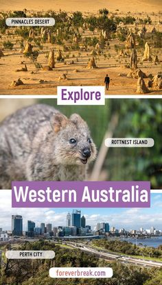 Explore Western Australia: What to Do, Where to Stay, Travel Tips, and More Calling all road tripper Travel Guides, Travel Tips, Desert Road, Australia Travel Guide, Road Trippers, Sandy Beaches, Rustic Design, Hotel Reviews