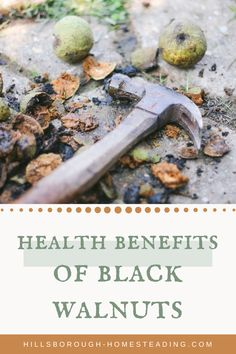 Black walnut trees can provide many uses to a homestead: they feed wildlife, are a source of valuable lumbar, food and medicine. For more info on the medicinal and health benefits of black walnuts, click the pin! Health Benefits Of Walnuts, Herbs For Health, Health And Wellness, Natural Health Remedies, Herbal Remedies, Black Walnut Tree, Natural Healing, Healing Herbs, Medicinal Herbs