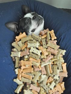 What dogs dream....