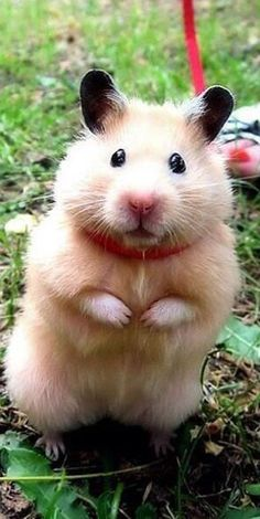 Cute & Lovely Photos Of Hamsters