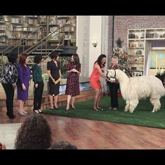 @KristinDavis discusses her work w/ @Oxfam & brings on a furry alpaca pal on #TheTalk!