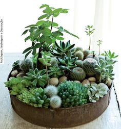 jardinzinho de suculentas em uma antiga forma de bolo. suculentas são super fáceis e práticas de cuidar.