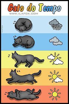 il sonno del gatto