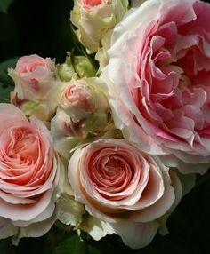 Joyeux Anniversaire Lulu, lettre d'une maman à sa fille - Quatre Saisons Au Jardin