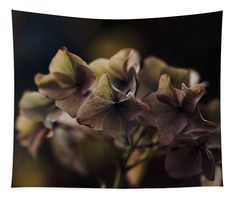 Winter withering Tapestry x by Helen Kelly. Our premium tapestries are available in three different sizes and feature incredible artwork on the top surface. Wall Spaces, Spring Colors, Spring Time, Hydrangea, Wall Tapestry, Fine Art America, Succulents, The Incredibles, Colours