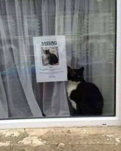 Feline lovers surely get sad at the sight of a 'missing cat' poster. Happily, this cat's owner got a happy ending. Funny Animal Memes, Funny Animal Pictures, Cute Funny Animals, Funny Cute, Cute Cats, Funny Memes, Missing Cat Poster, Lost Cat Poster, Chat Paris