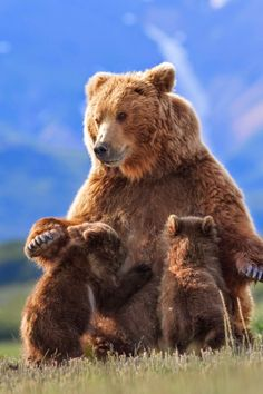 Movie Review: Disneynature's Bears - The Best Disneynature Film Yet!