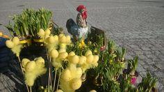 Hyvää ja munarikasta pääsiäistä kaikille    Kivapiha Plants, Planters, Plant, Planting