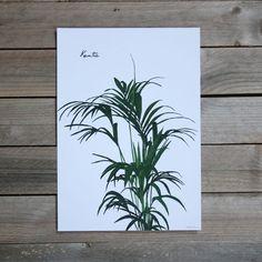 Lámina de la colección green de La Tortuguita Blanca. Una ilustración botánica muy bonita y decorativa disponible en varios tamaños.