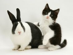 Bunny and Kitten = Friends
