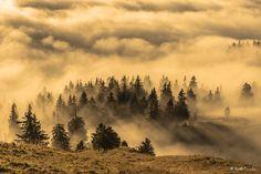 fog and sun - null