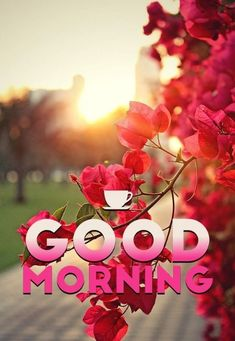 Romantic Good Morning Messages, Good Morning Friends Images, Latest Good Morning Images, Good Morning Beautiful Pictures, Good Morning Nature, Good Morning Msg, Good Morning Images Flowers, Morning Pics, Beautiful Images Of Flowers