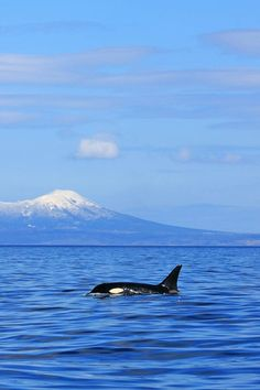 All orcas belong in the endless ocean, not confined in a tank.