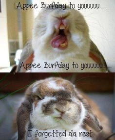 "The best pin ever: ""Happy birthday bunny"". Cute Baby Bunnies, Funny Bunnies, Cute Funny Animals, Cute Baby Animals, Funny Cute, Funny Rabbit, Pet Rabbit, House Rabbit, Funny Animal Quotes"