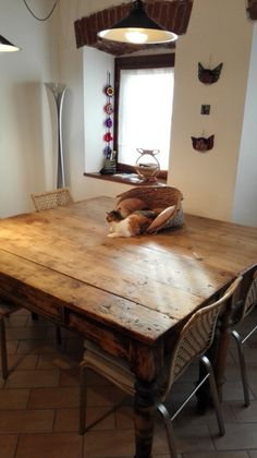 Italian old tables and young cat