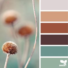 2019 Colouring Trend: Rust As Well As Other Earthy Tones - I bring only arrived dorsum from a fun, nonetheless massively intense few days inwards Germany, aid Domotex floor-covering fair in addition to IMM Col. Rust Color Schemes, Color Schemes Colour Palettes, Earthy Color Palette, Colour Pallette, Color Trends, Rustic Color Palettes, Earthy Colours, Color Combinations, Design Seeds