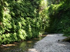 Fern Canyon, near Eureka, Cali