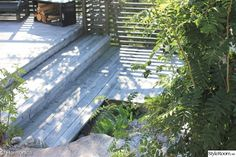 trapp,sibirisk lärk Plants, Image, Pictures, Plant, Planets