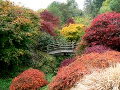 'The Acer Glade and arched bridge.'