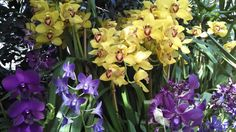 Orchids in a beautiful array of colors - NY Botanical Gardens