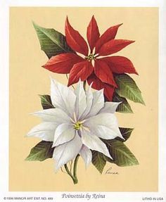 CHRISTMAS WHITE AND RED POINSETTIAS CLIP ART