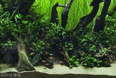 2014 AGA Aquascaping Contest - Entry #310