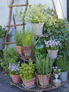 Small Cottage Garden Ideas, Small Garden Design, Garden Cottage, Rustic Landscaping, Garden Landscaping, Landscaping Design, Container Plants, Container Gardening, Small Gardens