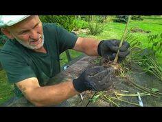 Rozmnażanie floksów - YouTube Gardening Tips, Dom, Youtube, Instagram, Balcony, Youtubers, Youtube Movies