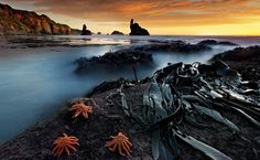 Trifecta by Christian Lim on 500px-long exposure on sea karsts, bull kelp and starfish at the tasman sea!