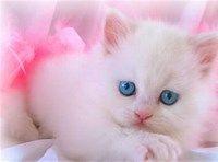 Bing My Saves Cute Cat Wallpaper Kitten Wallpaper Cat Wallpaper