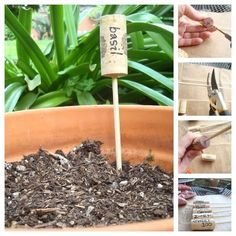 Write a plant name onto the cork, drill a hole, insert a bamboo skewer, and stick it in the dirt. Find the tutorial here.