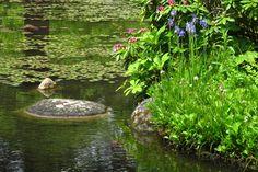Japanese Garden~Albert Kahn Garden Paris, France