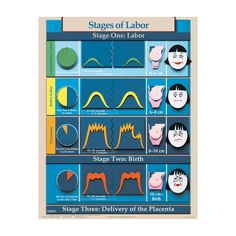Phases and Stages of Labor Chart