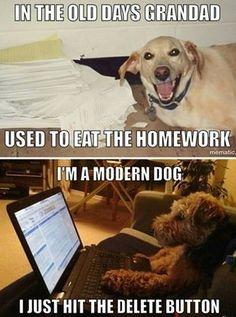 5 Funny Things Dogs Do When Left Alone At Home - Funny Dog Quotes - These extra-wholesome dog memes are giving us new life. Check out some of our favorite dog memes now and dont forget to pin your favorite! Funny Dog Memes, Funny Dog Videos, Funny Animal Pictures, Funny Photos, Funny Images, Funny Dogs, Dog Humor, Pet Memes, Pet Puns
