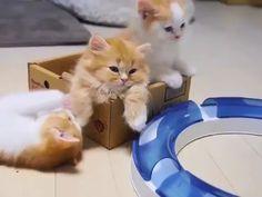 Ahihi,Cute - So niedlich - Gatos Cute Baby Cats, Cute Kitten Gif, Cute Cats And Kittens, Cute Funny Animals, Cute Baby Animals, Kittens Cutest, Funny Cats, Cute Babies, Beautiful Cats