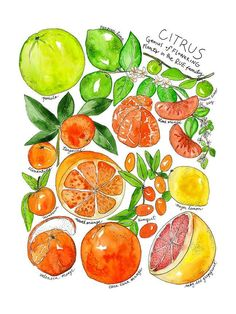 Produce Family Citrus Watercolor Print Art