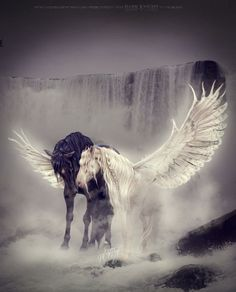 2017/07/01 Pegasus