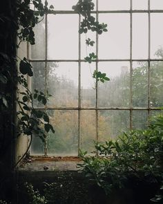 Slow Sundays and greenhouse corners. – Slow Sundays and greenhouse corners. – Related Basic Outfit Ideas Every Women Should Know For Winter - Nature Architecture, Slytherin Aesthetic, Window View, Rain On Window, Rainy Days, Rainy Night, Aesthetic Pictures, Nature Photography, Rainy Day Photography