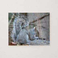 Shop Silver Squirrel Jigsaw Puzzle created by WestCreek. Challenging Puzzles, Animal Games, Poker Chips, Gifts For Pet Lovers, Deck Of Cards, Squirrel, More Fun, Jigsaw Puzzles, Gifts For Her