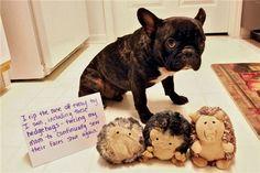 40+ Most    Popular Dog Shaming Shenanigans For Their Crimes #dogshaming