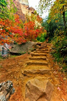 ✮ Rock staircase in along the Emerald Pools trail in Zion National Park