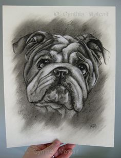 English Bulldog ORIGINAL Charcoal Drawing 9 x 11.5 Bull