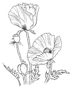 Poppies - Free Printable Coloring Pages Poppy Coloring Page, Flower Coloring Pages, Colouring Pages, Coloring Sheets, Coloring Book, Poppy Craft, Plant Drawing, Free Printable Coloring Pages, Silk Painting