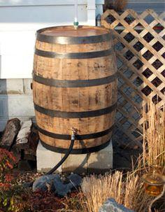 Whiskey barrel rain barrel
